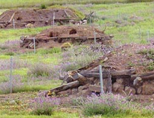 Claves para la recuperación del conejo de monte