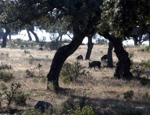 Modificaciones legales, caza e inseguridad jurídica