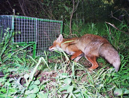 FEDEXCAZA organiza un curso de formación en control de predadores el 21 de mayo en Cáceres