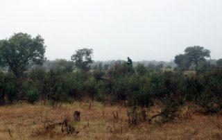 caza-menor-perro-BA-2012-04