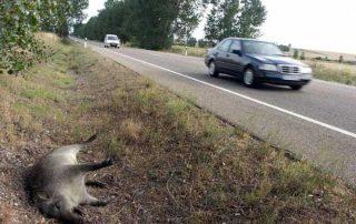 accidentes-trafico
