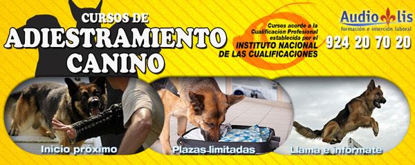 banner-adiestramiento-canino