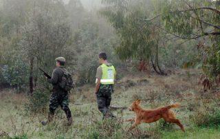 caza-menor-perro-07-11-13