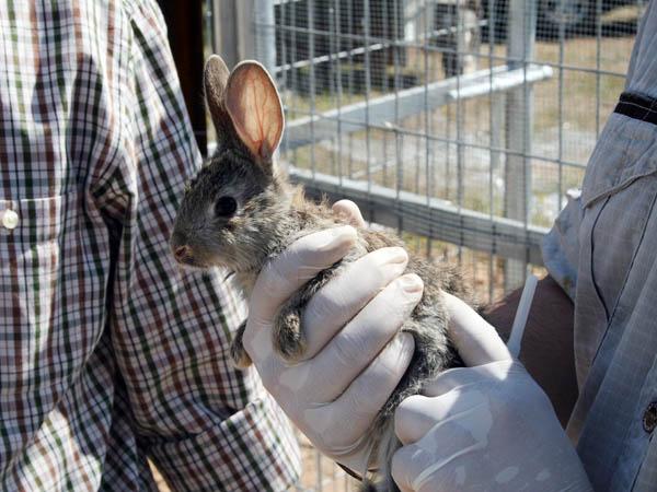 proyecto-recuperacion-conejo-01