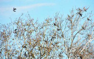 dormidero-palomas