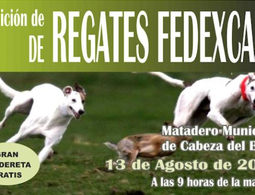 Cabeza del Buey acoge el 13 de agosto la III edición de Regates FEDEXCAZA