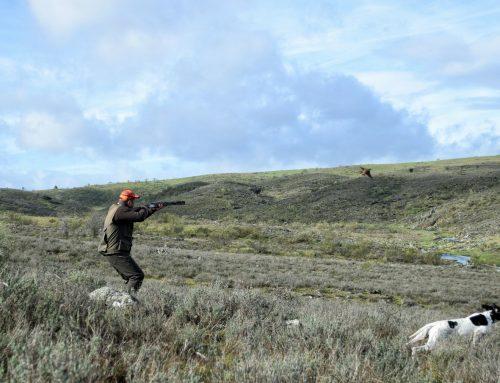 Recomendaciones de la RFEC en el inicio de la temporada general de caza