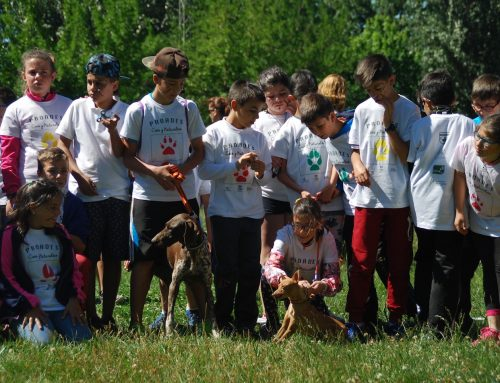 El proyecto escolar de FEDEXCAZA sobre 'Caza y Naturaleza' llegará en su segunda edición a más de 700 alumnos de Primaria