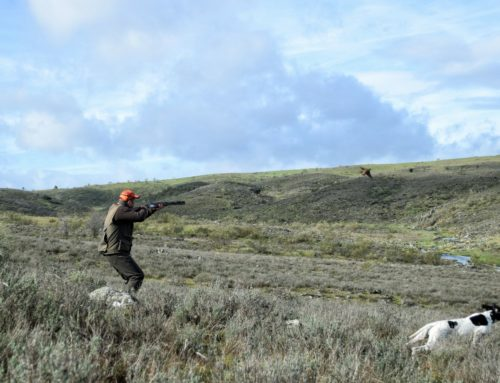 Recomendaciones de seguridad para los cazadores