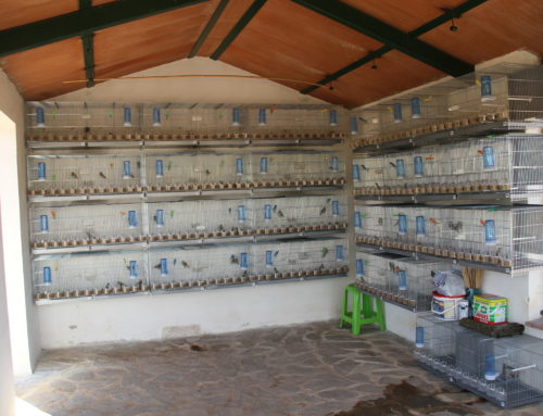Un informe científico del ICO destaca que la cría en cautividad de fringílidos no es viable