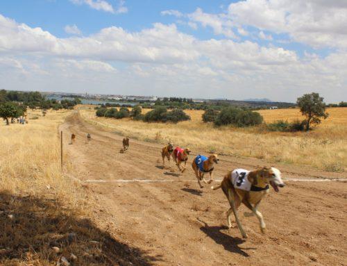 Celebrada en Esparragalejo la V Carrera de Galgos con Liebre Mecánica