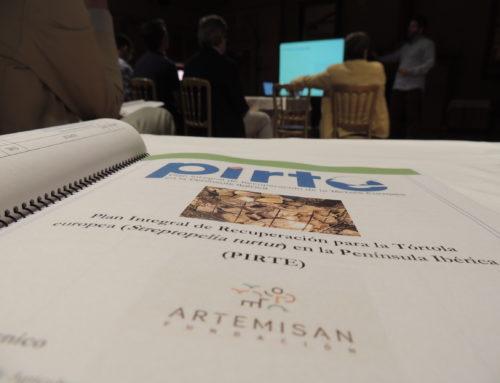 Artemisan plantea un Plan Integral de Recuperación para la Tórtola europea