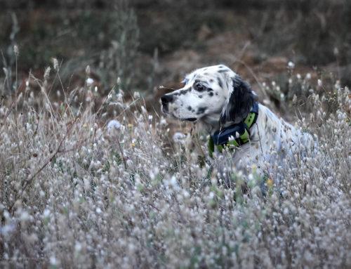 Cazadores y rehaleros que mueren por su perros