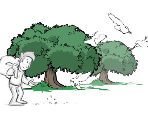 La Fundación Artemisan apuesta por gestionar el hábitat y favorecer la reproducción de la tórtola