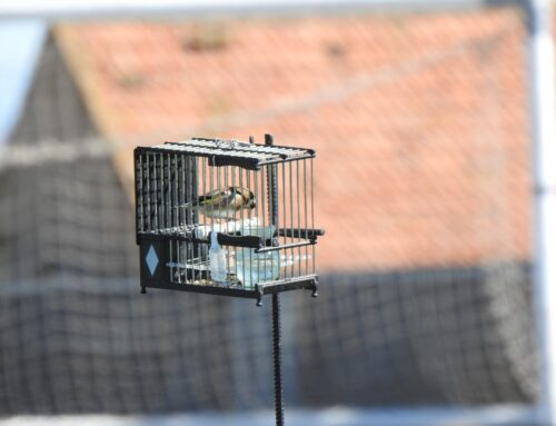 La RFEC y las Federaciones Autonómicas de Caza siguen luchando por la defensa del silvestrismo
