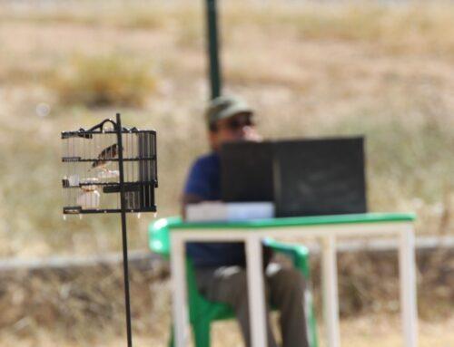 Situación actual del silvestrismo en Extremadura