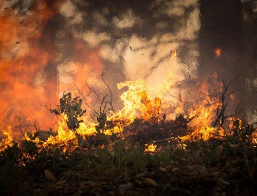 Caza e incendios forestales, la oportunidad para intereses bastardos