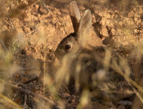 FEDEXCAZA financiará cuatro proyectos de investigación centrados en la recuperación de la caza menor